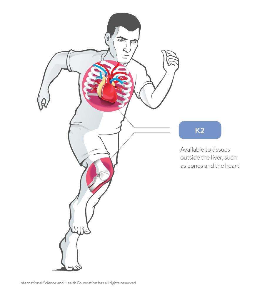 K2 in heart and bones